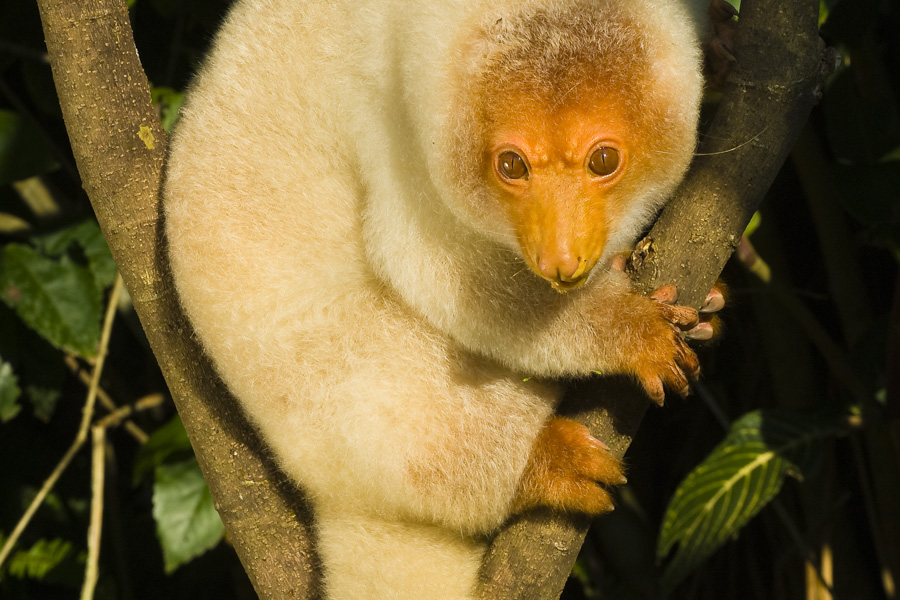 Play with a tree kangaroo at the Nature Park